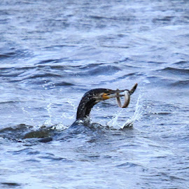 Catch of the day  by Chris Mcgurgan - Novices Only Wildlife