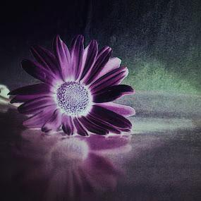 by Željko Oskoruš - Flowers Single Flower