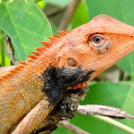 TITO by SANGEETA MENA  - Animals Reptiles