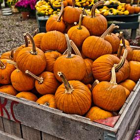 by John Amelia - Public Holidays Halloween ( pumpkins, halloween )