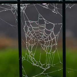 by Irena Gedgaudiene - Nature Up Close Webs