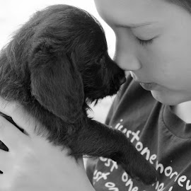 bringing Charlie home by Shannon Sommers - Animals - Dogs Puppies ( love, black and white, puppy, dog, boy )