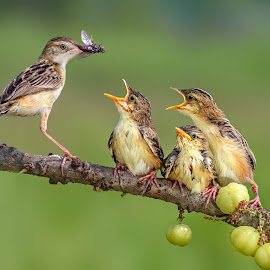 Mom, both of us really hungry by MazLoy Husada - Animals Other