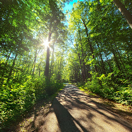 Down The Road Here From Me by Phil Koch - Transportation Roads ( forest, sunlight, green, road, woods, travel, trees, summer )