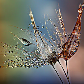 Ode To Freedom by Marija Jilek - Nature Up Close Natural Waterdrops
