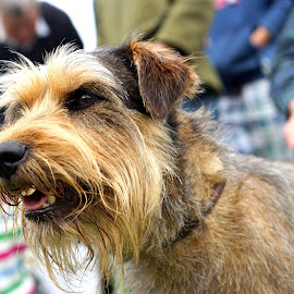 Terrier by Mick Wells - Animals - Dogs Portraits ( low down, terrier, cute, dog, bokeh, close up )