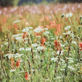 glads and wild carrots by Mike N Connie Holmes - Landscapes Prairies, Meadows & Fields