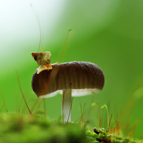by Dwi Sudarmawan - Nature Up Close Mushrooms & Fungi ( macro, nature )