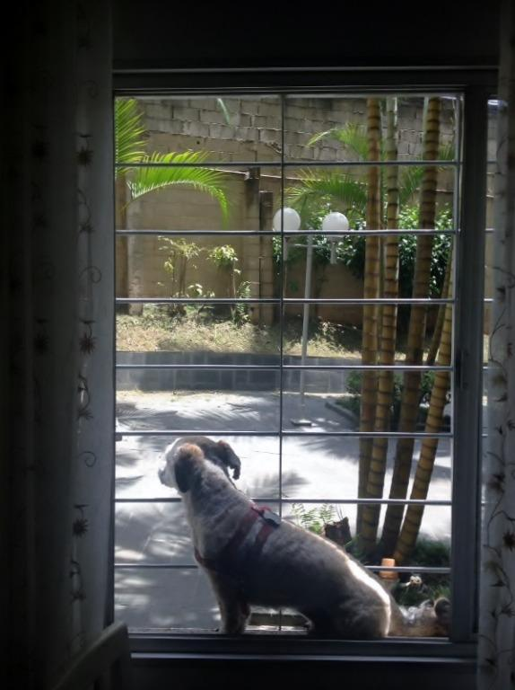 Apto 2 Dorm, Jardim d Abril, Osasco (AP13684) - Foto 5