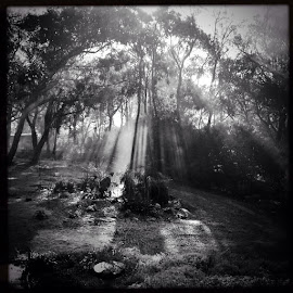 morning light by Donna Racheal - Instagram & Mobile iPhone ( instagram, black and white, hipstamatic, iphone, mobile )