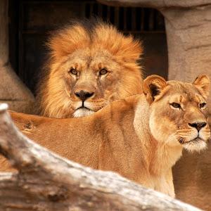 Tulsa Zoo_0004.jpg