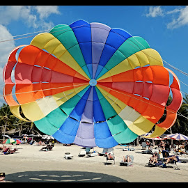 Paraglider by Svein Hurum - Sports & Fitness Other Sports (  )