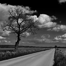 road to nowhere by Exo Kareas - Landscapes Prairies, Meadows & Fields ( blackandwhite, now, here, vanishingpoint, road )