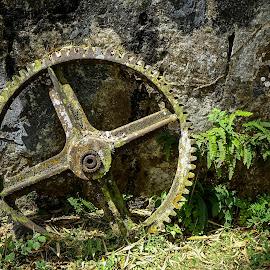 Gear Wheel by Dee Haun - Artistic Objects Technology Objects ( 2017, gear wheel, rusted, artistic object, 0301x7022rce1, abandoned, weathered, lichen,  )
