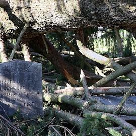 by Eva Pastor - City,  Street & Park  Cemeteries ( cemetery, gravestone,  )