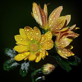 by Manuela Dedić - Flowers Flower Arangements