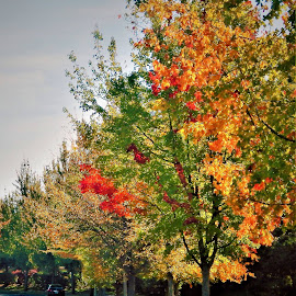 Fall Arrived by Lavonne Ripley - Nature Up Close Trees & Bushes