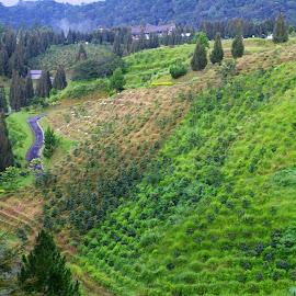 Simalem by Mulawardi Sutanto - Landscapes Prairies, Meadows & Fields ( field, medan, simalem, travel, garden )