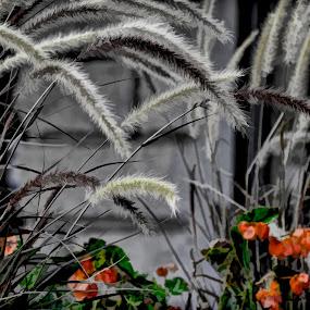 Autumn by Dobrinka Ivanova - Uncategorized All Uncategorized