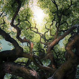 Growth by Janine Burrow - Nature Up Close Trees & Bushes ( nature, old tree, green, natural, light, sun, rays )