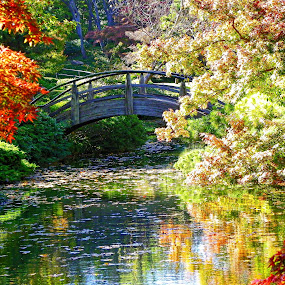 ------Japanese Gardens -Fort Worth ,Texas------ by Neal Hatcher - Landscapes Waterscapes ( , fall, color, colorful, nature )