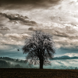 Passing by by Peter Pro - Nature Up Close Trees & Bushes ( bird, sky, tree, colors, trees, drama, landscape )