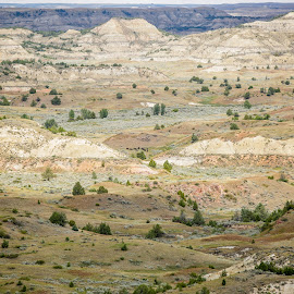 Theodore Roosevelt National Park by Nancy Merolle - Landscapes Travel ( painted canyon, buffalo, national park, north dakota, theodore roosevelt nat'l park )