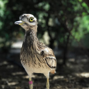 Bird1 by Sarath Sankar - Instagram & Mobile iPhone