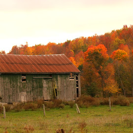 Fall Scene by Diane Irwin - Landscapes Mountains & Hills ( maple trees, fall colors, barn, autumn trees, fence line )