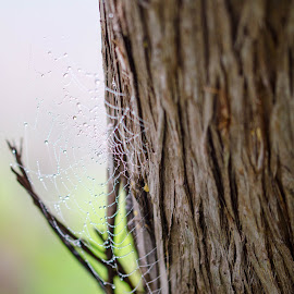 Web on tree by Wilma Michel - Nature Up Close Webs