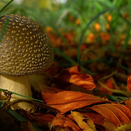 by Derek Tomkins - Nature Up Close Mushrooms & Fungi