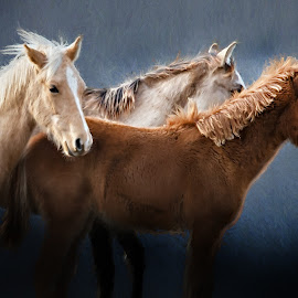 Three of a Kind by Robert Mullen - Animals Horses ( babies, animals, young folds, equine, horses, horse )