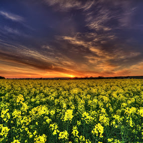 magic hour by Jong Onilcny - Landscapes Sunsets & Sunrises ( farm, sunset, landscapes )