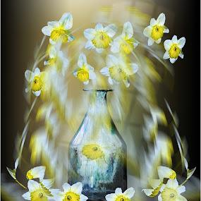 Daffodill fountain by Stephen Hooton - Uncategorized All Uncategorized (  )