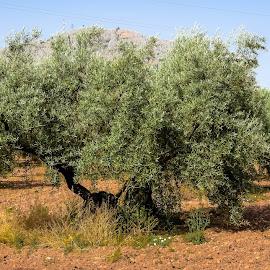 Malaga by Mike Hotovy - Nature Up Close Trees & Bushes