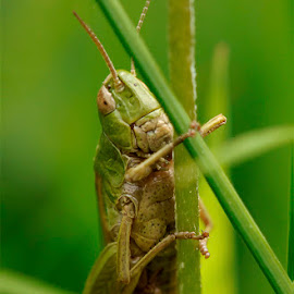 Grasshopper by Stephen Crawford - Animals Insects & Spiders ( stair, animals, wildlife, places, insects, grasshopper )