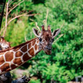 by Tim Gritzuk - Animals Other Mammals