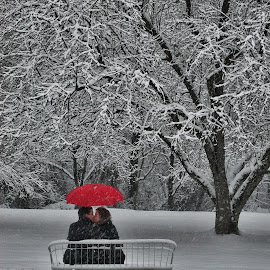 Come Under My Umbrella by Gwen Paton - People Couples ( snow, red umbrella, couple kissing, people )