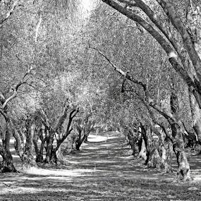 by Kathleen Whalen - Black & White Landscapes