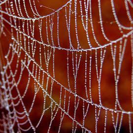 Colorful drops by Shrikrishna Bhat - Nature Up Close Webs ( sakleshpur, color, spider, web, water drop, , colors, landscape, portrait, object, filter forge, spiderweb )