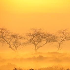 three trees , fog  and sunrise by Yahia  husain - Landscapes Deserts ( desert, tree, beautiful, beauty, sunrise, stunning )