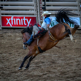 Rodeo by Tyson Page - Sports & Fitness Rodeo/Bull Riding ( spanish fork utah, utah, saddle, horse, rodeo, horse saddle bronco, bronco )