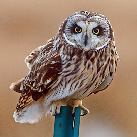 looking at you by Ed Bowman - Animals Birds ( nature, avian, wildlife, portraits )