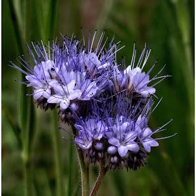 by Doreen L - Flowers Flowers in the Wild ( wildflowers, flowers,  )