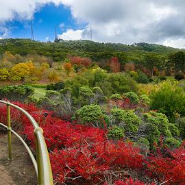 Mt. Lofty Botanical Gardens by Zdenka Rosecka - City,  Street & Park  City Parks