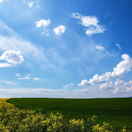 spring time by Nicu Hoandra - Landscapes Prairies, Meadows & Fields ( field, green, spring, sun, colours )