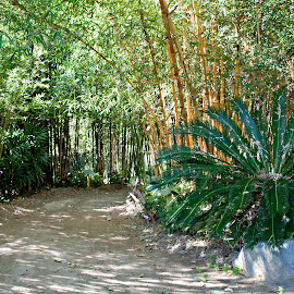 Walking Thru a Bamboo Pathway by Sherry Hallemeier - Nature Up Close Gardens & Produce ( public park, san diego, bamboo, desert, pathway, nature, california, greenery, trail, public, garden,  )