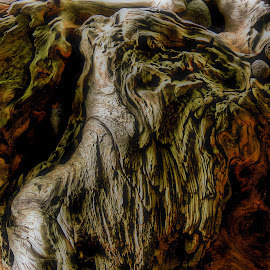 by Christopher Barker - Nature Up Close Other Natural Objects