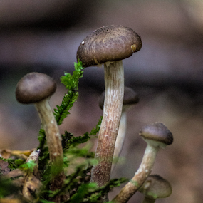 Tiny fungi by Vibeke Friis - Nature Up Close Mushrooms & Fungi ( macro, fungi,  )