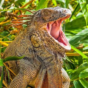 by Joan Sharp - Animals Amphibians ( animals, orange and green, spikes on back, yawning,  )